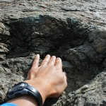 Dinosaur Fossils in Sucre